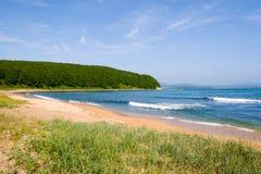 wilder na plaży Fotografia Royalty Free