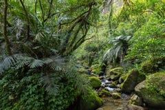 Wilder nasser Dschungel in Taiwan Lizenzfreies Stockfoto