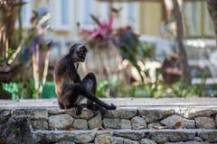 Wilder netter Affe, der auf Steintreppe an einem heißen Sommertag sitzt Stockfoto