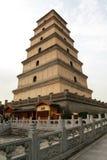 wilder pagodowy gigantyczny gęsi zdjęcia stock
