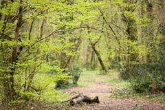 Wilder Pfadeingang im Wald Stockfotografie