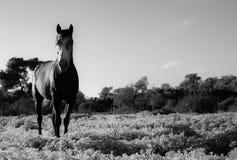 Wilder Pferdeportrait des vollen Körpers in einer Wiese Rebecca 6 stockfotografie