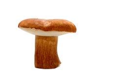 Wilder Pilz über Weiß stockfotografie