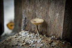 Wilder Pilz angebaut in einem alten Haus Stockfotografie