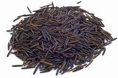 Wilder Reis Stockbild