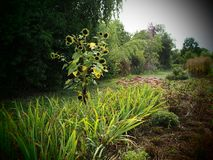 Wilder romantischer Bauernhofgarten auf einem Biobiohof lizenzfreie stockfotos