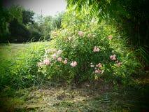 Wilder romantischer Bauernhofgarten auf einem Biobiohof stockfoto