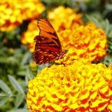 Wilder Schmetterling VII Stockfotografie