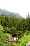 Wilder schneller Gebirgsstrom mitten in dem Wald Stockbild