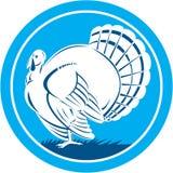Wilder Seitenansicht-Kreis der Türkei Retro- Stockbild