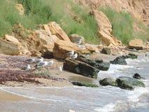 Wilder Strand auf dem Schwarzen Meer Stockfoto
