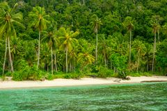 Wilder Strand, Dschungel und Palmen lizenzfreies stockfoto