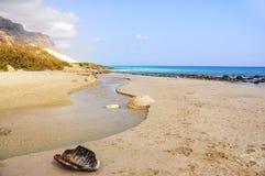 Wilder Strand Sandys und das azurblaue Meer, pantsir- Skelett einer großen Schildkröte Lizenzfreie Stockfotografie