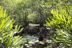 Wilder Teich stockbilder