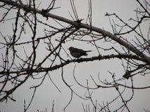 Wilder Vogel auf dem Baum lizenzfreies stockfoto