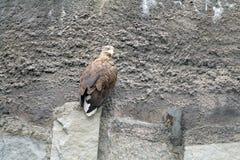 Wilder Vogel auf einem Felsen Lizenzfreies Stockfoto