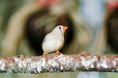 Wilder Vogel, der auf einer Stange sitzt Lizenzfreie Stockbilder