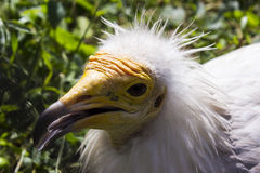 Wilder Vogel in einem Zoo Lizenzfreie Stockfotografie