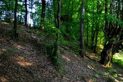 Wilder Wald stockfotografie