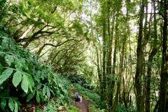 Wilder Wald auf Azoren Stockbild
