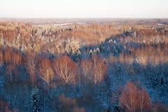 Wilder Wald bedeckt mit Schnee im Winter Lizenzfreies Stockfoto