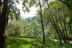 Wilder Wald der Natur Stockbild