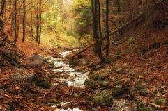 Wilder Wald des Herbstes im Naturreservat Lizenzfreies Stockfoto
