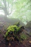 Wilder Wald mit einem toten Stamm Lizenzfreies Stockbild