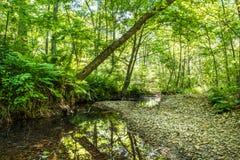 Wilder Wald mit Nebenfluss - hohe Dynamikwerte Stockfotografie