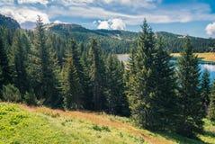 Wilder Wald und See unter der Sonne Stockfotografie