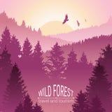 Wilder Waldsonnenaufgang, -berge, -kiefer und -fichte Eagles und Vögel im Flug Tourismus und Reise kampieren Die Horizontlinie im stock abbildung