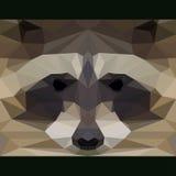 Wilder Waschbär starrt vorwärts an Abstrakte geometrische polygonale Dreieckillustration Lizenzfreies Stockfoto