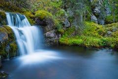Wilder Wasserfall Stockfotografie