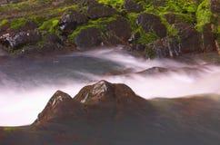 Wilder Wasserfall und Moos Lizenzfreie Stockfotos