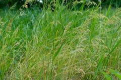 Wilder Wiesenrasenflächehintergrund stockbild