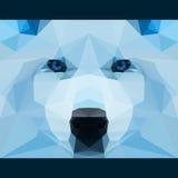 Wilder Wolf starrt vorwärts an Natur und Tierlebenthemahintergrund Abstrakte geometrische polygonale Dreieckillustration stock abbildung