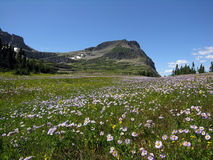 Wilderness. Wildflowers accent majestic crag royalty free stock image