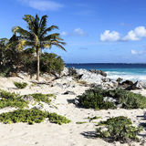 Wilderness. Caribbean beach in summer in Mexico Royalty Free Stock Photo