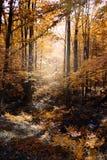 Wilderness. Woods stock image