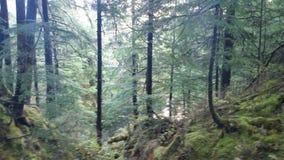 wilderness Imagens de Stock Royalty Free