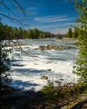 室外安大略Wilderness湖森林风景场面 库存照片