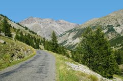 Through wilderness. Mountain road going through the wilderness. There are a lot of coniferous trees scattered on the mountainsides Royalty Free Stock Photography