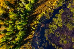 Direct downward view of wilderness in autumn. Downward view of marshland and forest in autumn in Ontario Canada royalty free stock images
