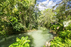 Wilderness along the Martha Brae River, Falmouth, Jamaica. Wilderness along the Martha Brae River,  a popular tourist attraction in Jamaica Royalty Free Stock Photos