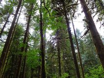 Woodlands in wilderness area in North Cascades stock photography