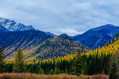 Wilderness Autumn Colors Stock Photography