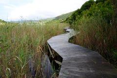 Wilderness Boardwalk in the Garden Route Stock Photos