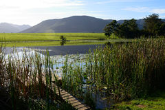 Wilderness Boardwalk in the Garden Route, South Africa Royalty Free Stock Photography