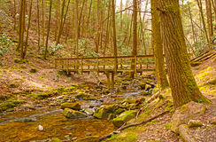 Wilderness Bridge on a Forest trail Stock Image