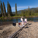 Wilderness camping Royalty Free Stock Photography